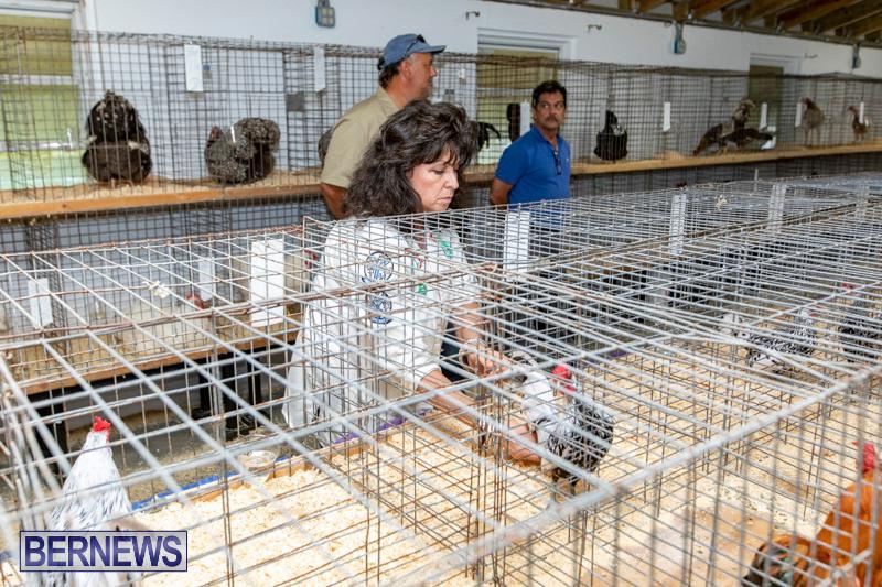 Ag-Show-Poultry-Bermuda-April-10-2019-0029