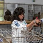 Ag Show Poultry Bermuda, April 10 2019-0031