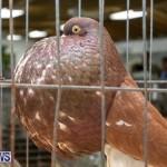Ag Show Poultry Bermuda, April 10 2019-9958