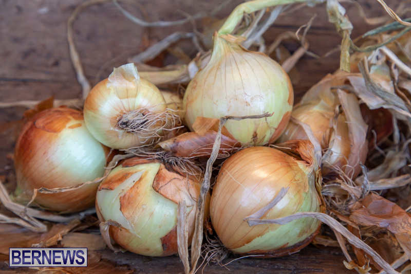 Bermuda-Onion-Day-at-Carter-House-May-18-2019-6821