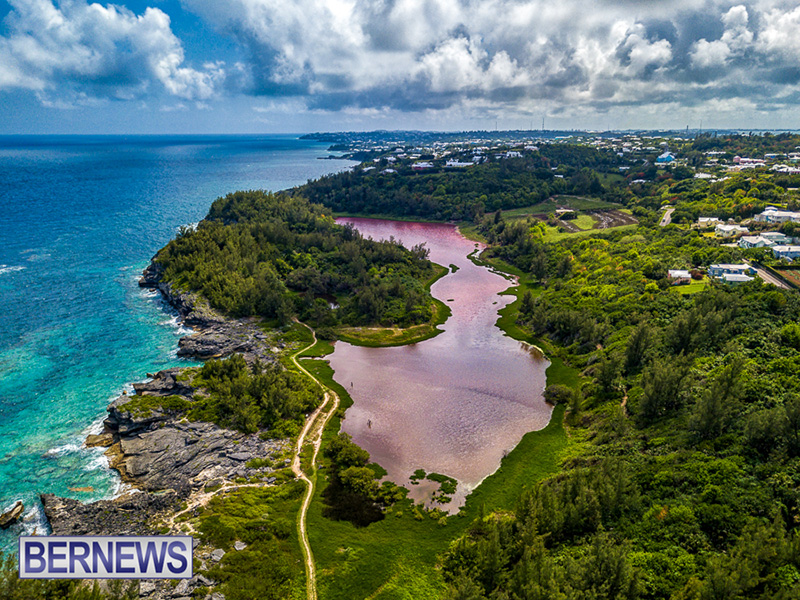 Algae Blooming Bermuda June 2019 (2)