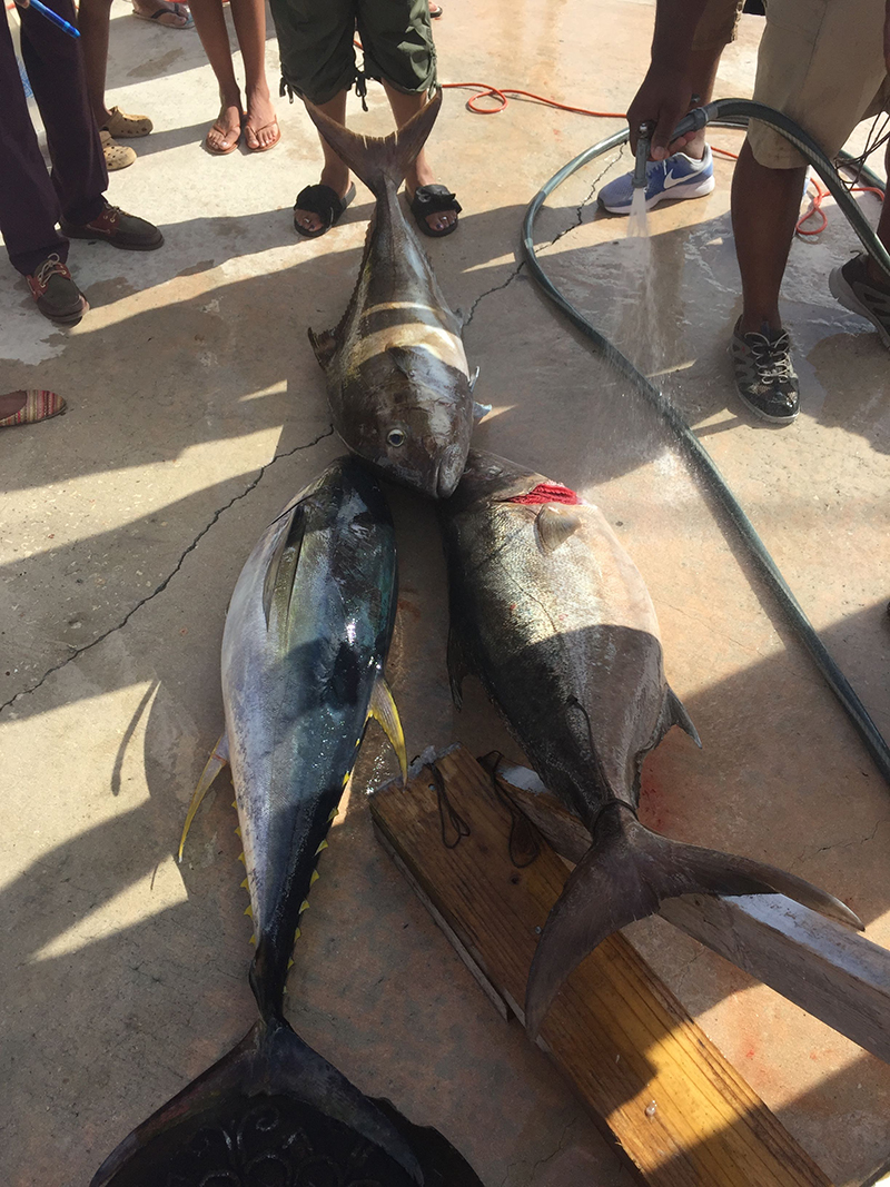 Robinson's Fishing Tournament Bermuda July 2019 (11)