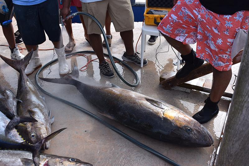 Robinson's Fishing Tournament Bermuda July 2019 (3)