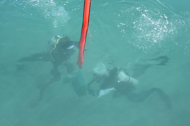 Bermuda-Sub-Aqua-Club-August-2019-12