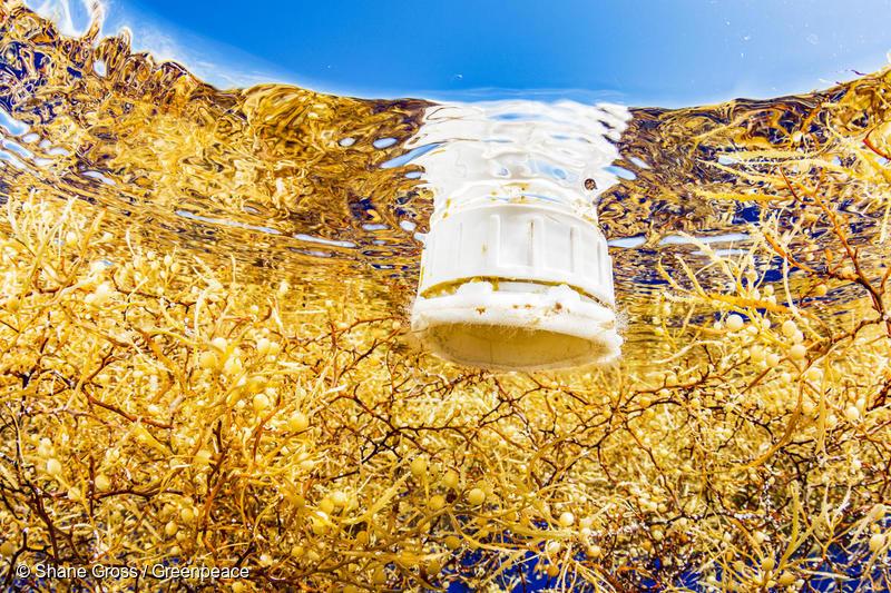 Plastic Debris in the Sargasso Sea