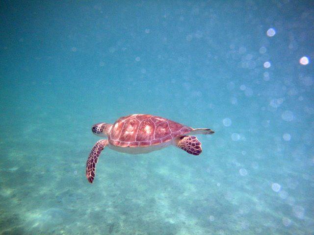 Turtle Project Bermuda Aug 2019 (3)
