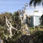 Bermuda After Hurricane Humberto Sept 20 2019 (39)