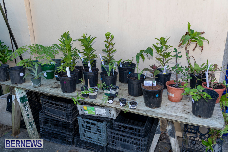 Bermuda Botanical Society Plant Sale, October 12 2019-4650