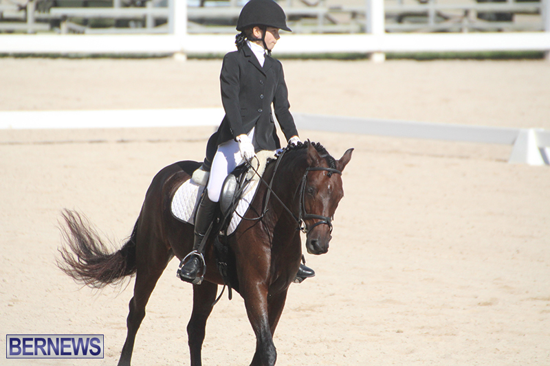 Bermuda-Dressage-Show-Oct-13-2019-1
