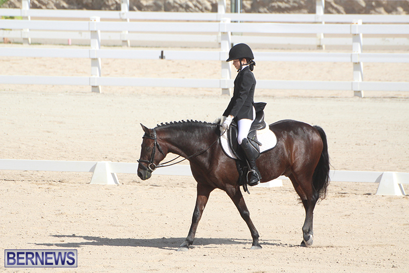 Bermuda-Dressage-Show-Oct-13-2019-10