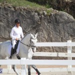 Bermuda Dressage Show Oct 13 2019 (11)