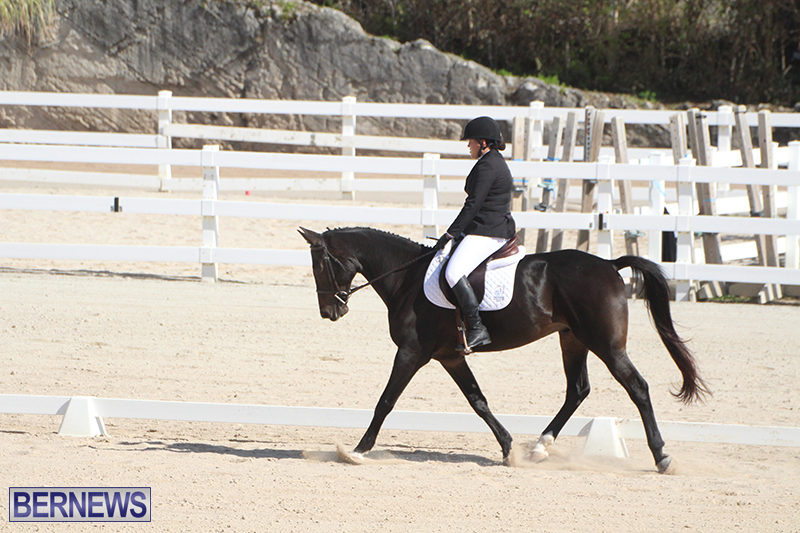 Bermuda-Dressage-Show-Oct-13-2019-13