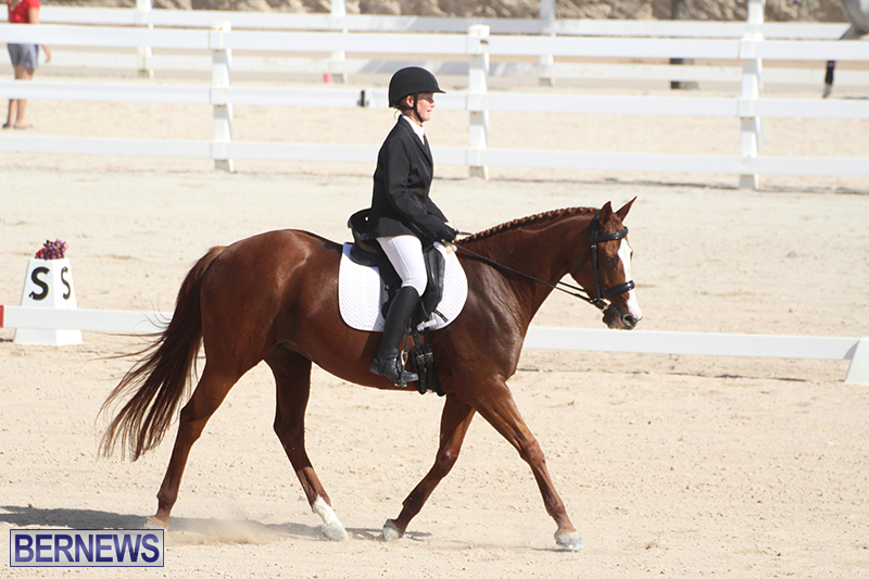 Bermuda-Dressage-Show-Oct-13-2019-18