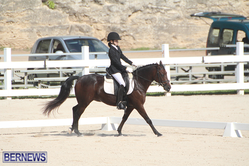 Bermuda-Dressage-Show-Oct-13-2019-5