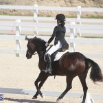 Bermuda Dressage Show Oct 13 2019 (7)