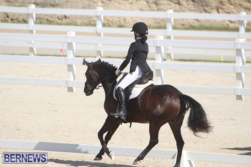Bermuda-Dressage-Show-Oct-13-2019-7