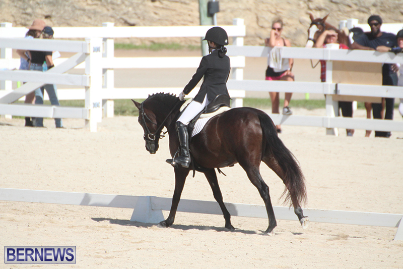 Bermuda-Dressage-Show-Oct-13-2019-8