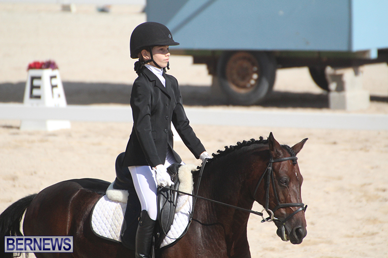 Bermuda-Dressage-Show-Oct-13-2019-9