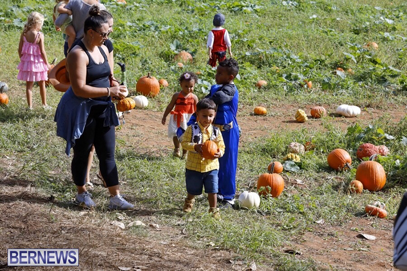 JJ-Produce-Pick-Your-Own-Pumpkin-Bermuda-October-11-2019-10