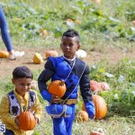 J&J Produce Pick Your Own Pumpkin Bermuda October 11 2019 (11)