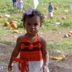 J&J Produce Pick Your Own Pumpkin Bermuda October 11 2019 (12)