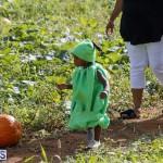 J&J Produce Pick Your Own Pumpkin Bermuda October 11 2019 (29)