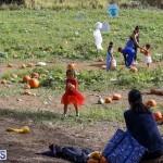 J&J Produce Pick Your Own Pumpkin Bermuda October 11 2019 (3)