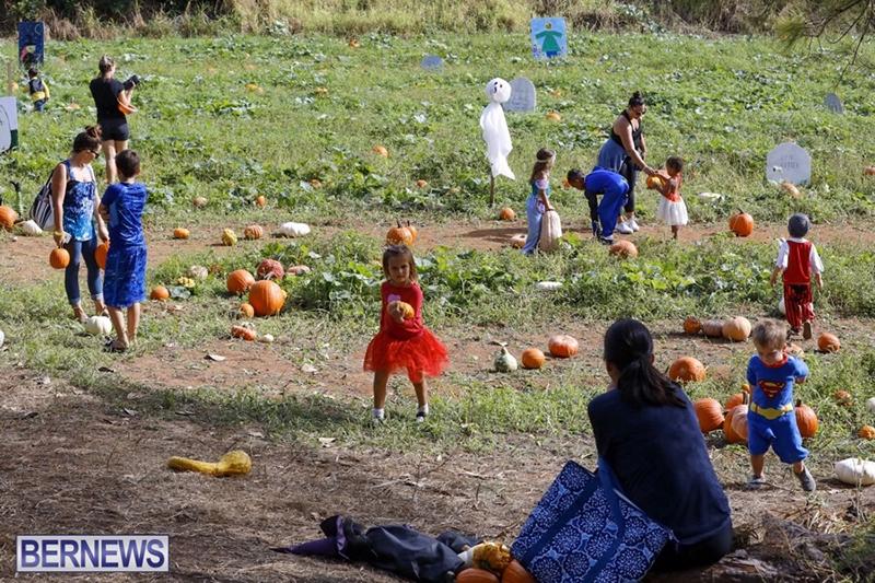JJ-Produce-Pick-Your-Own-Pumpkin-Bermuda-October-11-2019-3