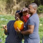 J&J Produce Pick Your Own Pumpkin Bermuda October 11 2019 (32)