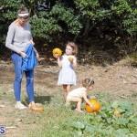 J&J Produce Pick Your Own Pumpkin Bermuda October 11 2019 (33)