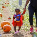 J&J Produce Pick Your Own Pumpkin Bermuda October 11 2019 (37)