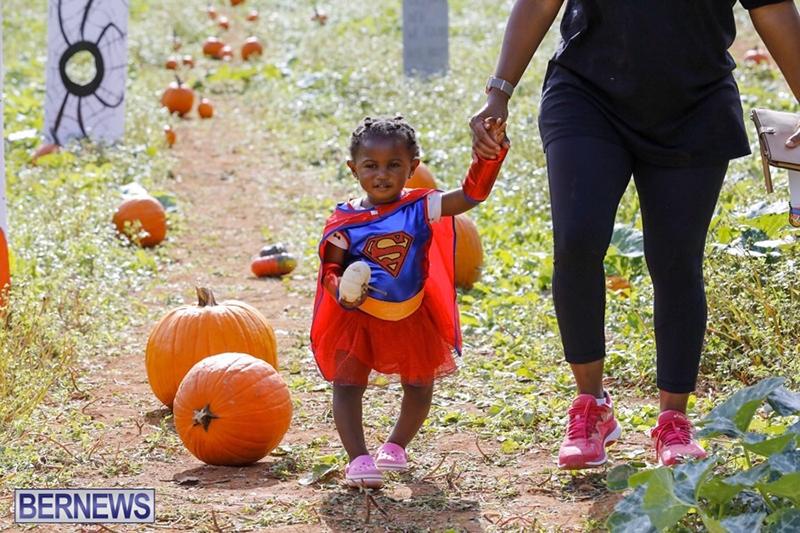 JJ-Produce-Pick-Your-Own-Pumpkin-Bermuda-October-11-2019-37