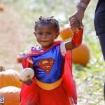 J&J Produce Pick Your Own Pumpkin Bermuda October 11 2019 (38)