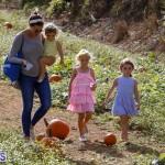J&J Produce Pick Your Own Pumpkin Bermuda October 11 2019 (39)