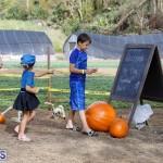 J&J Produce Pick Your Own Pumpkin Bermuda October 11 2019 (49)