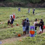 J&J Produce Pick Your Own Pumpkin Bermuda October 11 2019 (5)