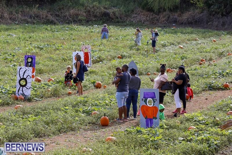 JJ-Produce-Pick-Your-Own-Pumpkin-Bermuda-October-11-2019-5