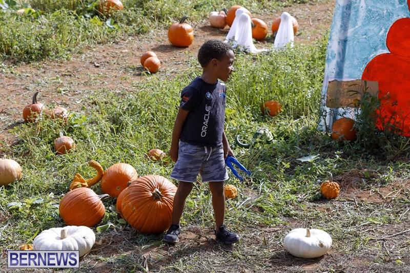 JJ-Produce-Pick-Your-Own-Pumpkin-Bermuda-October-11-2019-58