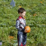 J&J Produce Pick Your Own Pumpkin Bermuda October 11 2019 (61)