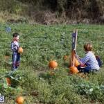 J&J Produce Pick Your Own Pumpkin Bermuda October 11 2019 (62)