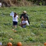 J&J Produce Pick Your Own Pumpkin Bermuda October 11 2019 (65)