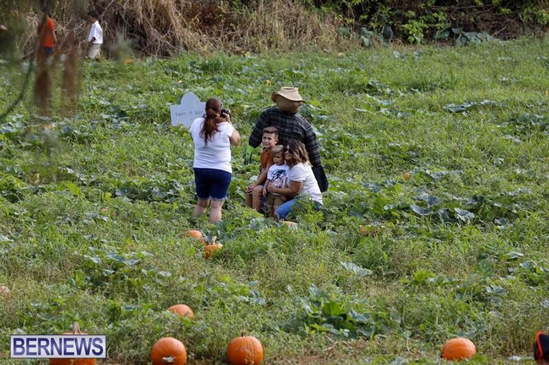 JJ-Produce-Pick-Your-Own-Pumpkin-Bermuda-October-11-2019-65