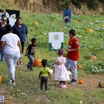 J&J Produce Pick Your Own Pumpkin Bermuda October 11 2019 (66)