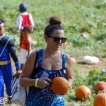 J&J Produce Pick Your Own Pumpkin Bermuda October 11 2019 (9)