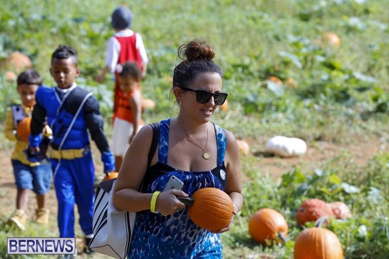 JJ-Produce-Pick-Your-Own-Pumpkin-Bermuda-October-11-2019-9