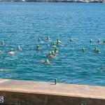Round the Sound Swim Bermuda, October 13 2019-6053