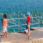 Round the Sound Swim Bermuda, October 13 2019-6059