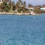Round the Sound Swim Bermuda, October 13 2019-6077