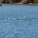 Round the Sound Swim Bermuda, October 13 2019-6079