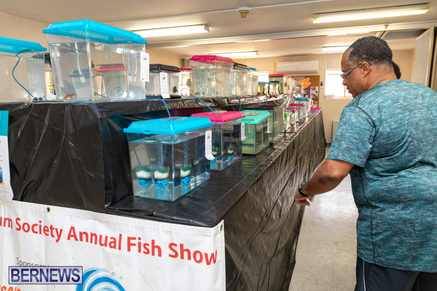 Bermuda-Fry-Angle-Aquarium-Society-Annual-Tropical-Fish-Show-November-16-2019-2447